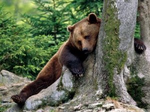 5811f-rest_stop_brown_bear-1600x1200