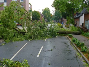 storm-damage-tree-down