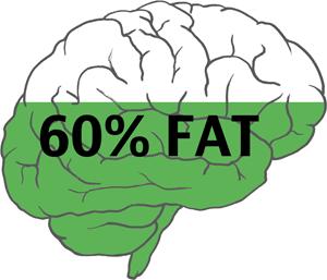 60-pct-fat-brain