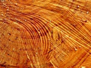 gouged-wood
