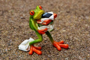 frog carrying books and papers