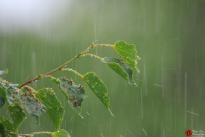 rain-on-leaves