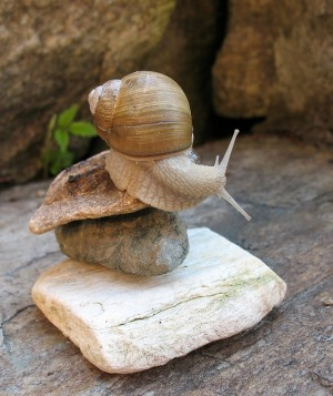 Sometimes this is how it feels - like I'm a snail on a rock. But at least I'm balancing.