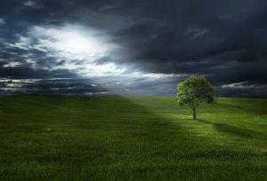moon shining on tree in field