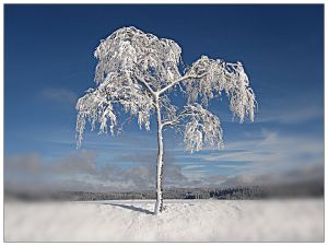 tree covered in snow with forest in distance